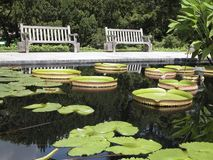 Botanical Gardens 1. Two garden benches and unique waterplatters (Victoria cruziana Royalty Free Stock Image