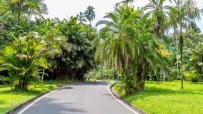 Botanical gardens Bogor, West Java, Indonesia. Botanical gardens Kebun Raya in Bogor, West Java, Indonesia Stock Photo