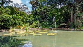 Botanical gardens Bogor, West Java, Indonesia. Botanical gardens Kebun Raya in Bogor, West Java, Indonesia Royalty Free Stock Image