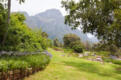 Botanical Gardens Cape Town Royalty Free Stock Photos