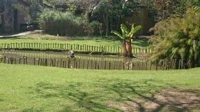 Botanical gardens in Johannesburg Royalty Free Stock Photo