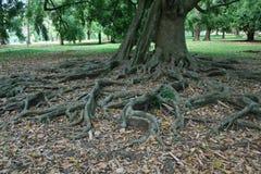 Botanical Gardens Stock Images
