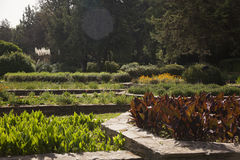 Botanical gardens Royalty Free Stock Photo