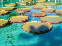 Botanical Gardens Villa Taranto Italy Stock Photos
