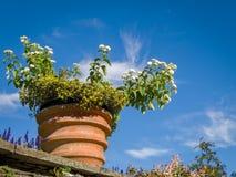 Botanical Gardens Villa Taranto Italy Royalty Free Stock Photos