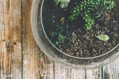 Botanical, Glass, Growth Stock Photo