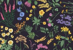 Botanical horizontal backdrop with blooming wild flowers, summer meadow flowering herbs and gorgeous herbaceous plants vector illustration