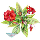 Botanical illustration stock illustration