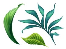 Botanical illustration, floral clip art, design elements set, green leaves, jungle greenery, tropical foliage, isolated on white. Botanical illustration, floral stock illustration