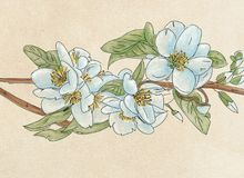 Blue flowers,botanical illustration with flowers and leaves, floral decoration. Botanical illustration with flowers and leaves, floral decoration Stock Images