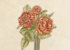 Three red roses,botanical illustration with flowers and leaves, floral decoration. Botanical illustration with flowers and leaves, floral decoration Stock Photos