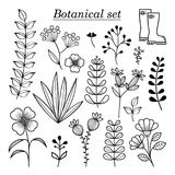 Botanical illustration, hand drawn wild flowers and herbs collection Royalty Free Stock Image