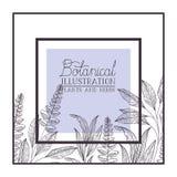 Botanical illustration label with plants and herbs. Vector illustration desing royalty free illustration