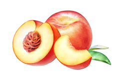 Botanical illustration of the peaches Royalty Free Stock Photo