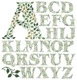 Botanical Leaves Alphabet/eps. Hand-drawn alphabet of leafy green vines in shades of green...suitable for drop caps or monograms on printed pieces such as Royalty Free Stock Photography