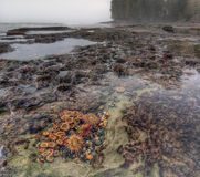 Botanical life in tidal pool Royalty Free Stock Image