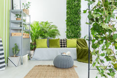 Botanical living room. With grey sofa, green pillows and bookcase Royalty Free Stock Image