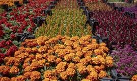 Botanical market. Various flowers in crates. royalty free stock photos