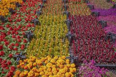 Botanical market. Various flowers in crates. stock photo