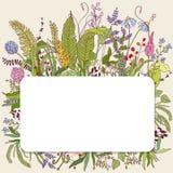 Botanical nature card Royalty Free Stock Images