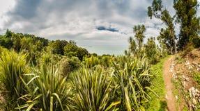 Botanical Park near sea Royalty Free Stock Image