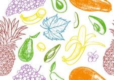 Botanical pattern of avocado, pineapple, grapes, bananf and papaya.Healthy fruit hand drawn seamless vector texture. royalty free illustration