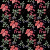 Pattern with blackberries and autumn leaves. royalty free illustration