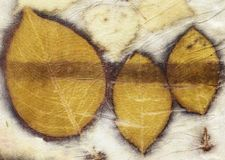 Botanical print with leaf prints on natural silk stock photos