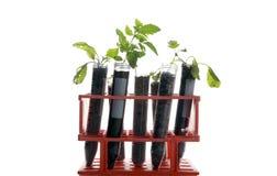 Botanical research Stock Photo