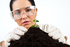 Botanical scientist in laboratory. Botanical scientist checking ground in laboratory and looking to a small plant,check also my collection Scientists people Stock Photos
