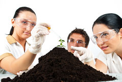 Botanical scientist team. In laboratory making experiments on a plant in soil , a scientist woman pointing to plant while her colleague pouring liquid with a Royalty Free Stock Photos