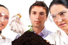 Botanical scientist team in laboratory. Close up of botanical scientists team working in laboratory,a woman holding a pipette and pouring liquid on a plant and Stock Photography