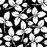 Botanical seamless pattern Royalty Free Stock Images