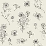 Botanical seamless pattern with blooming calendula plant, cut flower heads and buds hand drawn with contour lines Royalty Free Stock Images