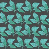 Botanical seamless pattern with green plantain leaves on dark background. Medicinal herbaceous plant hand drawn in. Vintage style. Vector illustration for Royalty Free Stock Photography