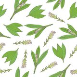 Botanical seamless pattern with green turmeric leaves and inflorescences hand drawn on white background. Backdrop with Royalty Free Stock Image