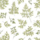 Botanical seamless pattern with Miracle Tree or Moringa oleifera leaves and flowers on white background. Floral backdrop. Plant used in herbalism. Realistic vector illustration