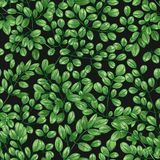Botanical seamless pattern with Miracle Tree or Moringa oleifera leaves. Realistic backdrop with green foliage of. Cultivated plant used in phytotherapy stock illustration