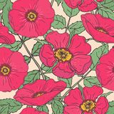 Botanical seamless pattern with pink dog roses, green stems and leaves. Beautiful garden flowers hand drawn in vintage Stock Image