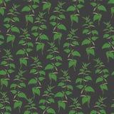Botanical seamless pattern with stinging nettle on dark background.   Stock Photos