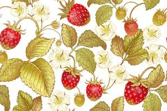 Botanical seamless pattern with strawberry. Seamless botanical pattern with flowers and berries of strawberry on white background. Vintage. Victorian style royalty free illustration