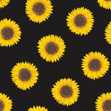Botanical seamless pattern with sunflower heads. Natural backdrop with blooming flower or cultivated crop hand drawn on stock illustration