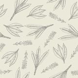 Botanical seamless pattern with turmeric leaves and inflorescences. Herbaceous plant hand drawn with contour lines on Royalty Free Stock Photo