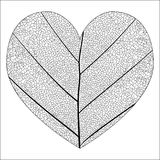 Botanical series Elegant detailed Single leaf closeup texture structure in sketch style black and white on white background in the Royalty Free Stock Photography