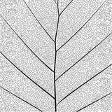 Botanical Series Elegant Detailed Single Leaf Structure In Sketch Style Black And White On White Background Royalty Free Stock Photo
