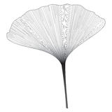 Botanical series Elegant Ginkgo leaf in sketch style in black and white on white background Royalty Free Stock Photos