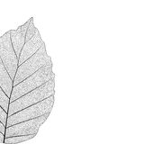 Botanical series Elegant Single detailed  partial leaf in sketch style  black and white on white background Royalty Free Stock Photography