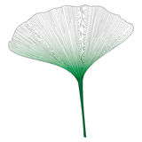 Botanical series Elegant Single Exotic leaf in sketch style in black and green gradient on white background. Illustration royalty free illustration