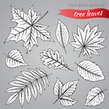 Botanical set: highly detailed hand drawn leaves Royalty Free Stock Images