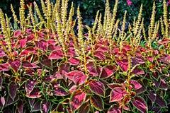 Botanical silhouettes royalty free stock image